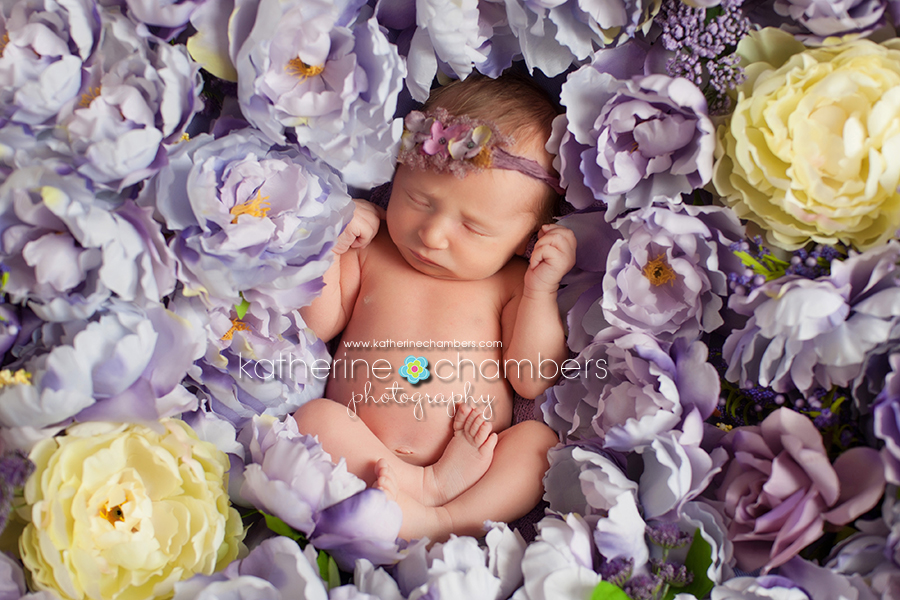 Avon ohio newborn photographer rocky river ohio newborn photographer westlake ohio newborn photographer